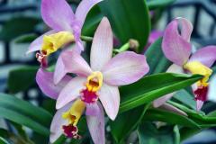 wre14199-B / Orchideen-Blüte am Tag der offenen Tür bei Meyer Orchideen AG