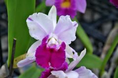 wre14200-B / Orchideen-Blüte am Tag der offenen Tür bei Meyer Orchideen AG